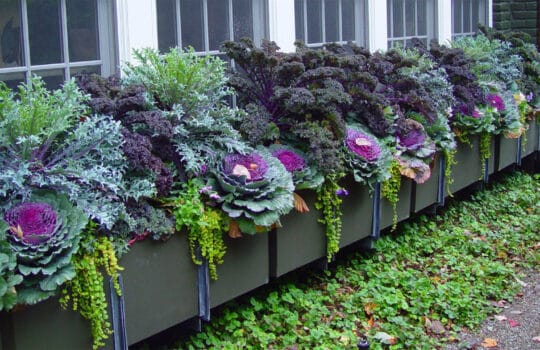 Colorful landscape enhancements help bring in the festive fall season.