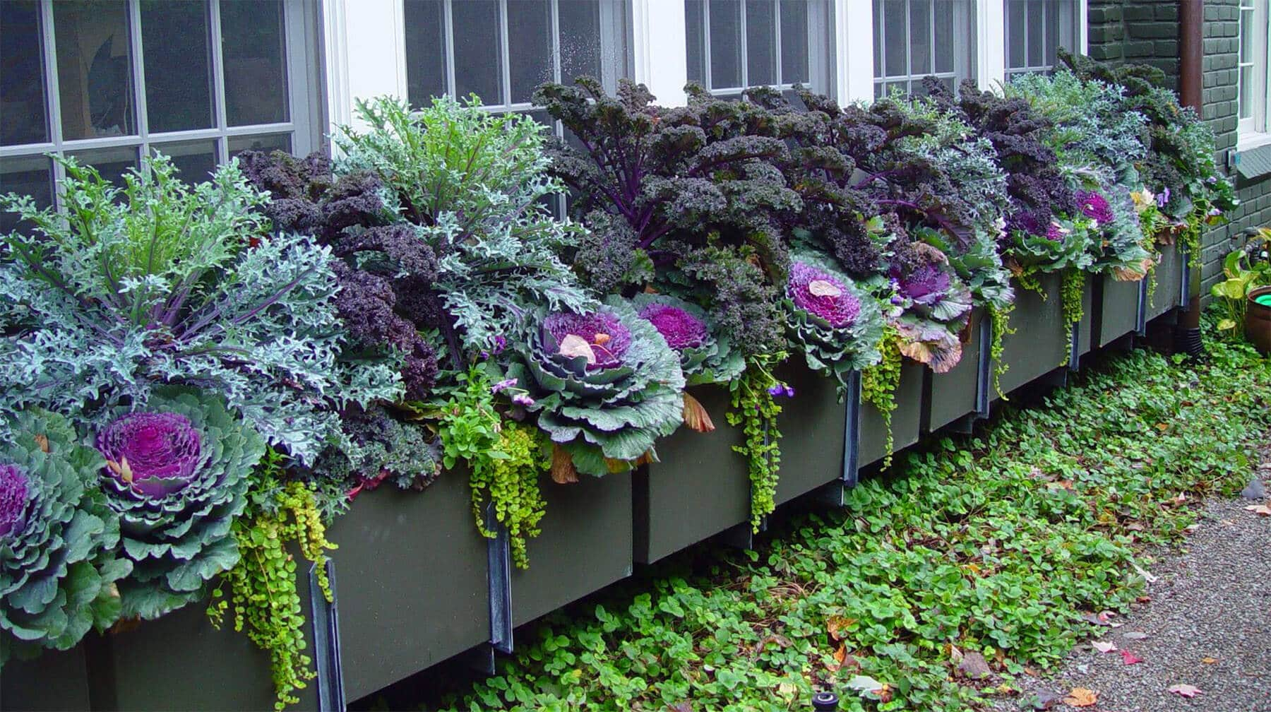 Blog Featured – Colorful landscape enhancements help bring in the festive fall season.