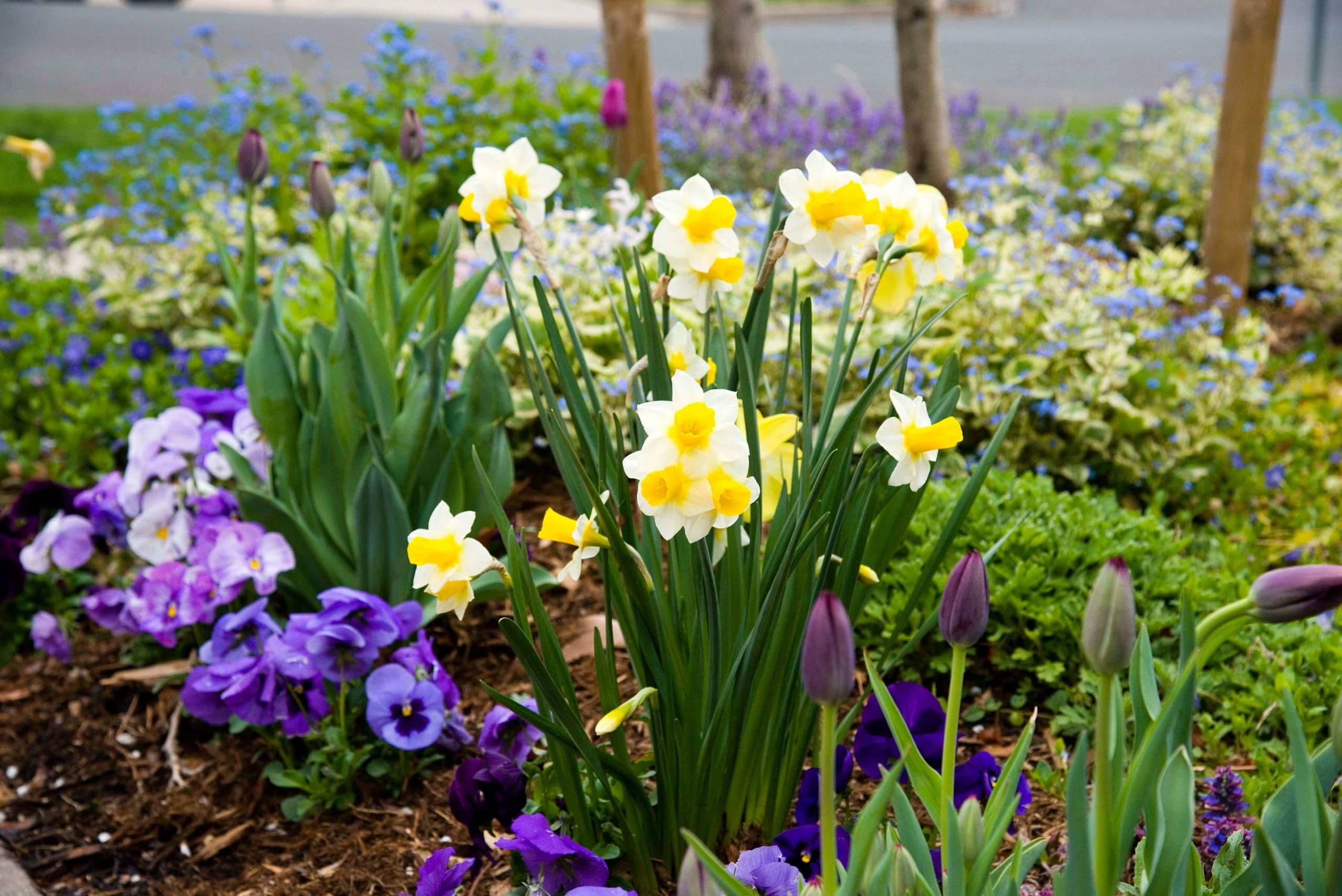 Blog Featured – It's time to plant tulips, daffodils and other bulbs for beautiful spring color.