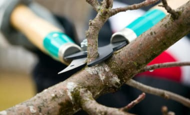 Blog Featured – Top Four Reasons to Prune Trees and Shrubs in the Winter + Pruning Tips