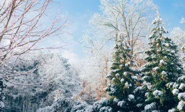 Blog Featured – How to Ensure Your Landscape Survives the Winter