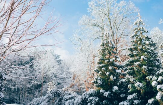How to Ensure Your Landscape Survives the Winter