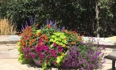 Blog Featured – Color Your Landscape for Spring