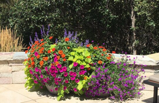 Color Your Landscape for Spring