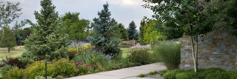 7 Tips to Bring your Landscape Back to Life
