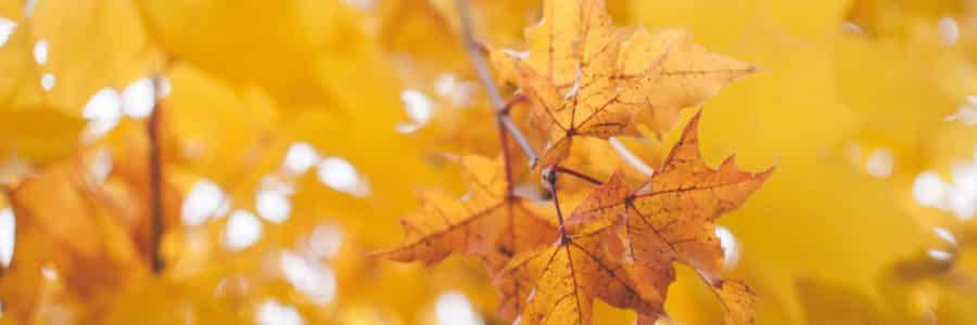 A Checklist to Prepare Your Landscape for the Changing of Seasons