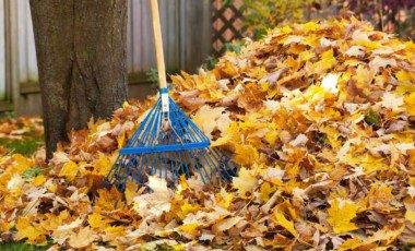 Blog Featured – Don't Waste Your Landscape Waste