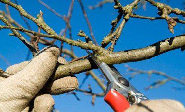 Blog Featured – Why Pruning Your Plants Is Wintery Business