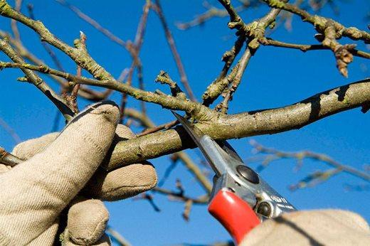 Why Pruning Your Plants Is Wintery Business
