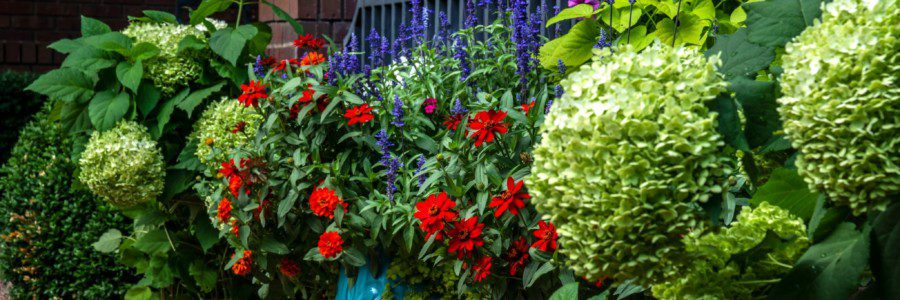 3 Tips For Growing A Summer Garden That Dazzles