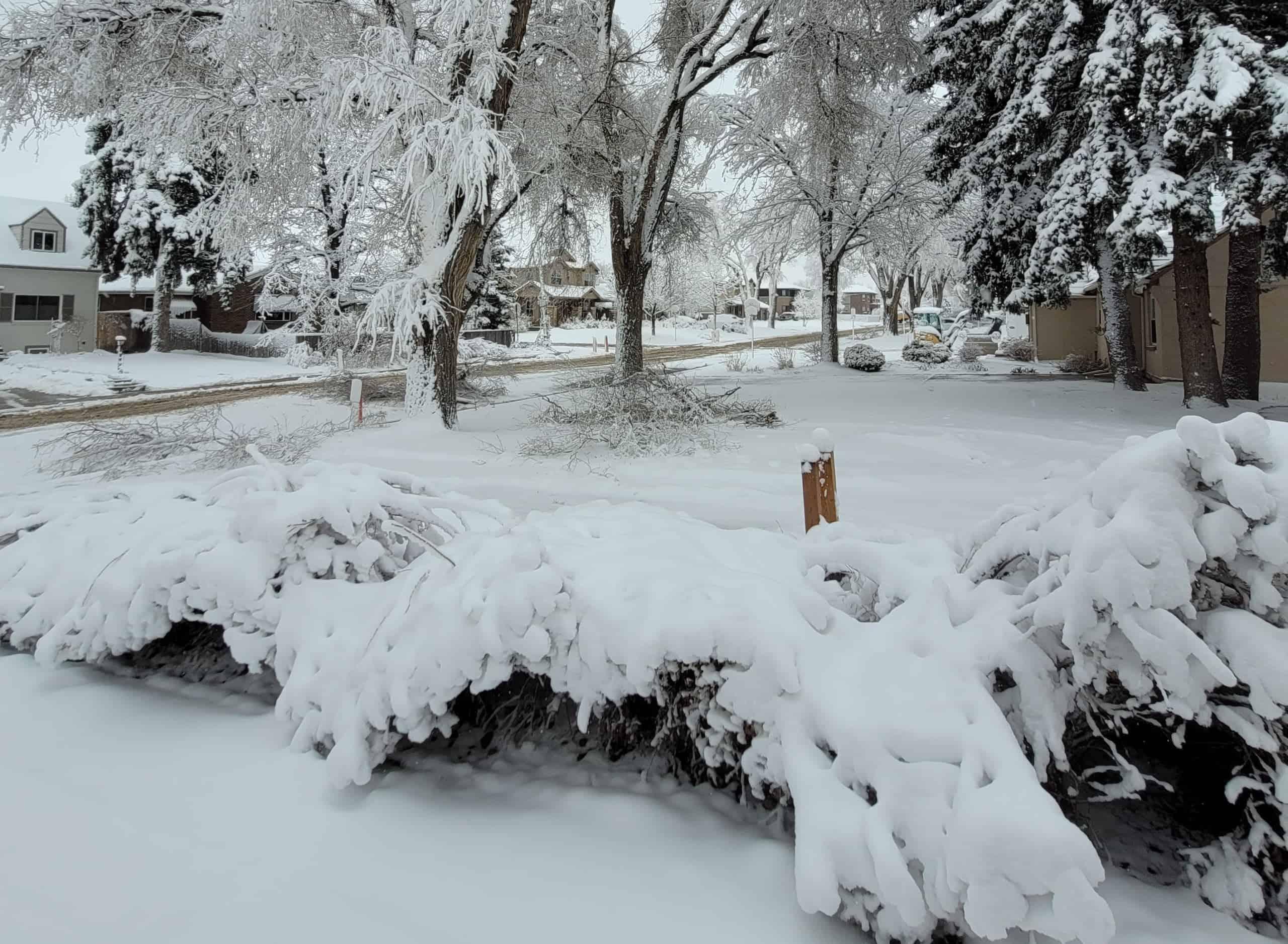 Late Spring Snow in Colorado