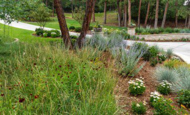 Blog Featured – Water Conservation in your Garden