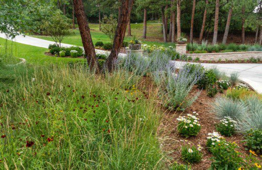 Water Conservation in your Garden