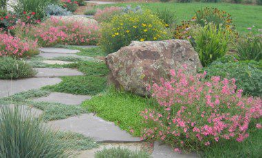 Blog Featured – 5 Secrets to the Perfect Xeric Garden