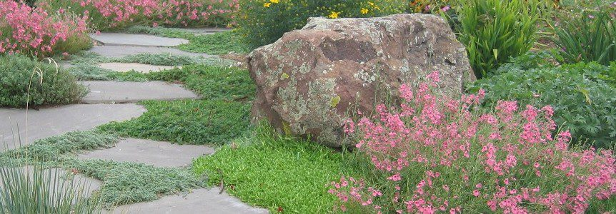 5 Secrets to the Perfect Xeric Garden